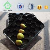 生鮮食品の表示フルーツのAlveolosの顧客用プラスチック使い捨て可能な皿