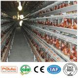 Клетка цыпленка яичка слоя птицефермы техника Poul (горячее гальванизирование)