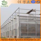 Hoja de policarbonato Hoja de policarbonato / Hoja de PC de invernadero para plantas