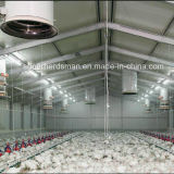 Poultry personalizzato House Construction con Steel