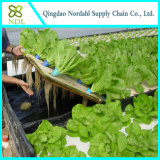 Hydroponic 식물성 시스템