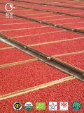 Красный цвет Gojiberry трав Goji мушмулы органический
