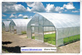 Chambre verte de film hydroponique commercial pour le raisin