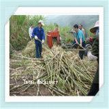 Lame de dessus de canne à sucre de prix bas éliminant le solvant de lame de canne à sucre