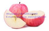 Nueva Cosecha de manzana Fuji