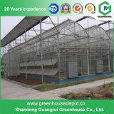 De commerciële Serre van het Blad van het Polycarbonaat van de Structuur van het Staal voor Bloem en Groenten