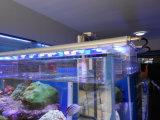 Luces del acuario del poder más elevado White+Blue LED para el tanque de pescados