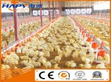 Maison préfabriquée en élevage avec poulet