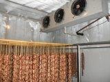 Chambre froide pour des fruits et légumes 230 tonnes