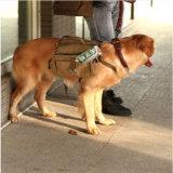 개, 야영을 하이킹하는 여행자 사냥개 부대 여행을%s 안장 부대 책가방