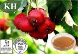 Flavonóides do extrato do Hawthorn 5% 20% por UV