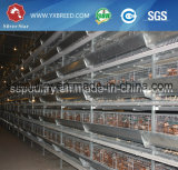 Цыплятина наслаивает оборудование фермы клеток цыпленка в Англии