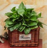 (BC-WF1013)高品質のハンドメイドの自然なヤナギの花のバスケット