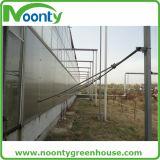 Plantation de la serre chaude du vert House/PC de feuille de polycarbonate/de Chambre de Venlo