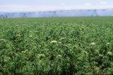 Het kleine Systeem van de Irrigatie van het Landbouwbedrijf