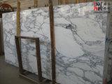 床タイルおよび壁のタイルのためのArabescato Corchiaの白い大理石の平板
