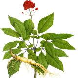 Extrato da raiz do Ginseng dos anos de idade 6 com 80% Ginsenoside