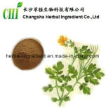 Maggior 4:1 ~20 dell'estratto dell'erba di Calandine: 1 per il supplemento dell'alimento