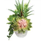 La planta artificial/plástica fijó con Bryophyllum y la hoja plana en crisol