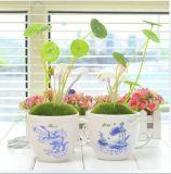 Plantas Potted de la luz de la seta de la oficina de la manera de la fuente de la fábrica