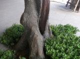 녹색은 인공적인 Maidenhair 나무를 남겨둔다 (indoor&outdoor 훈장을%s)