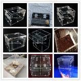 Freie Acrylfenster-Vogel-Zufuhr mit Sucion Cup