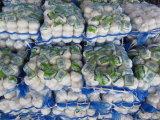 Сбывания нового чеснока сезона китайского свежего горячие