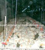 Las aves de corral filtran el equipo del alimentador para la granja del control de la parrilla