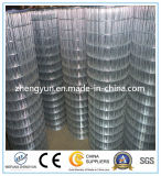 Rete metallica saldata vendita calda galvanizzata tuffata calda (fabbrica)