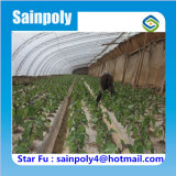 ナスのためのSainpolyのブランドの低価格の太陽温室