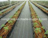 Anti-UVlandwirtschaftliches pp. Weed Steuerplastikgewebe China-