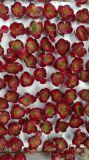 Plantes et fleurs artificielles de la centrale succulente Gu-Jys-00038