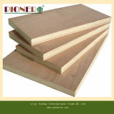 12mm White Birch Commercial Plywood pour Furniture et Cabinet