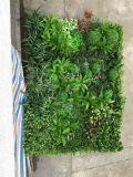 Piante di alta qualità e fiori artificiali della parete verde Gu-Wall14425931409800