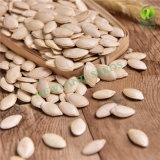Семена тыквы кожи Shine с высоким качеством и горячим сбыванием