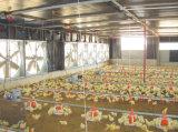 Полуфабрикат стальное Structue конструировало дом птицефермы