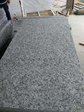 Galettes royales de granit de Rosa Classico Bianco Sardo G439 de Pentecôte pleines