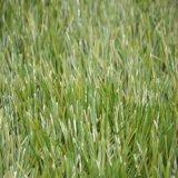 (ST) 인공적인 야구 잔디, 합성 스포츠 표면