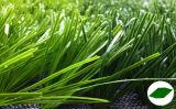 、フットボールの草人工、サッカーの草(MD010)