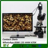 Biologisches Mikroskop
