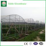 鉄骨構造を持つ野菜栽培者のための単一スパンのトンネルの温室