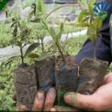 ينمو [نونووفن] رخيصة قابل للتفسّخ حيويّا حقيبة, غير يحاك بناء لأنّ خضرة, غرس, معمل ينمو حقيبة