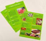 Brochure colorée avec le laminage de Matt (DPB003)