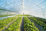 Film agricultural Greenhouse para Vegetable Growing (zf1)
