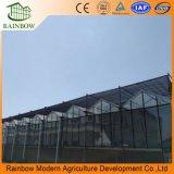 Invernadero de vidrio industrial