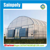 Chambre verte de film hydroponique commercial pour le poivre