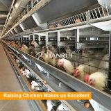 Couche automatique de matériel de volaille soulevant la cage de poulet