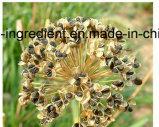 塊茎のタマネギのシードのエキスのケルセチンの粉のニラネギのエキス