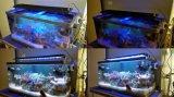 Intelligente Verre LEIDEN Licht bij-101 van het Aquarium