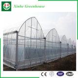野菜のための新しい農業のフィルムの温室